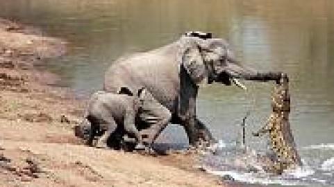 verdens største elefant nogensinde
