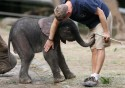 GALLERI: Ny elefantbaby i Wuppertal